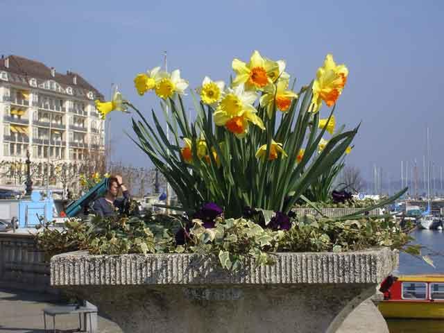 Цветы на Quai du Mont-Blanc